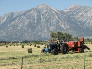 The hay harvest and bailing is going on throughout the Valley.