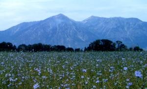 Photo by Kris Tengberg Wildflower meadow spreads out in front of Jobs Peak