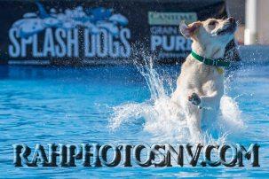 SplashDogs-carsonvalleytimes-072514RonHarpin10