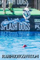 SplashDogs-carsonvalleytimes-072514RonHarpin13