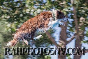 SplashDogs-carsonvalleytimes-072514RonHarpin21