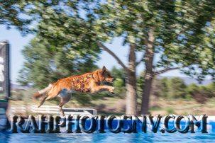 SplashDogs-carsonvalleytimes-072514RonHarpin22