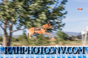 SplashDogs-carsonvalleytimes-072514RonHarpin25