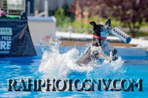 SplashDogs-carsonvalleytimes-072514RonHarpin3