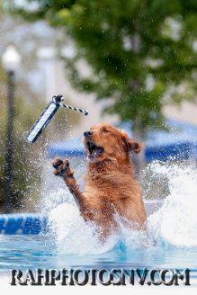 splashdogs-carsonvalleytimes-072614RonHarpin1
