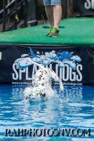 splashdogs-carsonvalleytimes-072614RonHarpin10