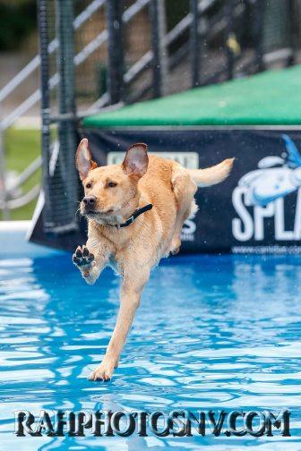splashdogs-carsonvalleytimes-072614RonHarpin11