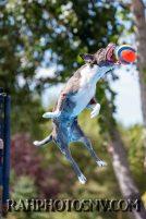 splashdogs-carsonvalleytimes-072614RonHarpin16