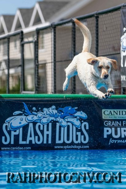 splashdogs-carsonvalleytimes-072614RonHarpin18