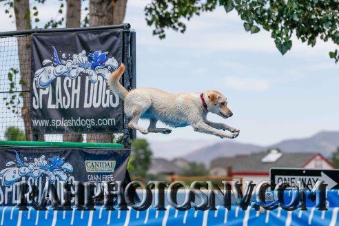 splashdogs-carsonvalleytimes-072614RonHarpin3