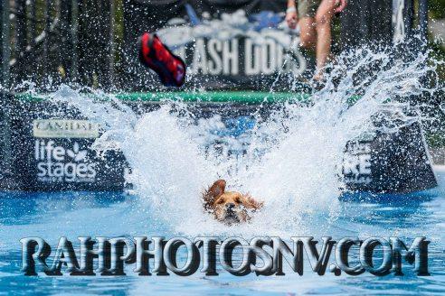 SplashDogs-carsonvalleytimes-072614RonHarpin30