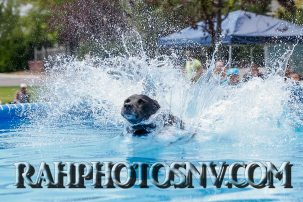 SplashDogs-carsonvalleytimes-072614RonHarpin31