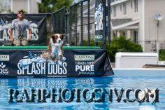SplashDogs-carsonvalleytimes-072614RonHarpin32