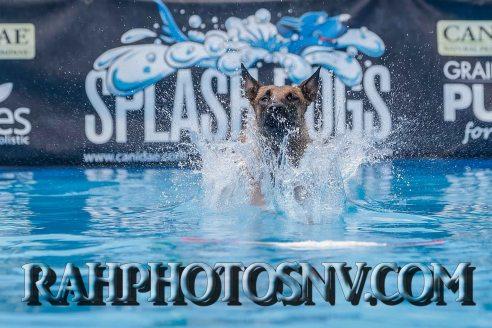SplashDogs-carsonvalleytimes-072614RonHarpin33
