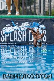 SplashDogs-carsonvalleytimes-072614RonHarpin37