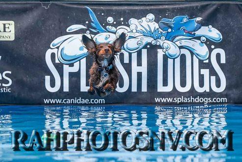 SplashDogs-carsonvalleytimes-072614RonHarpin38