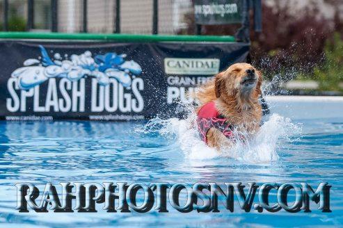 splashdogs-carsonvalleytimes-072614RonHarpin5