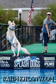 splashdogs-carsonvalleytimes-072614RonHarpin8