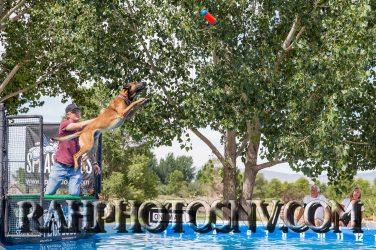 SplashDogs1-carsonvalleytimes-072614RonHarpin-4