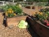 garden6-cvt-071913